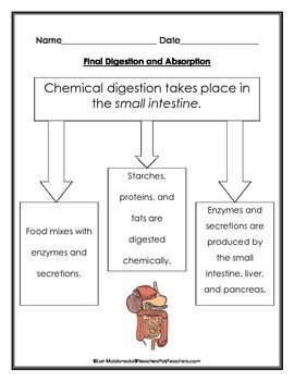 what is an example of chemical digestion