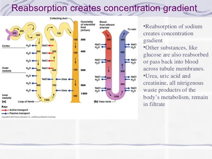 what is an example of concentration gradient