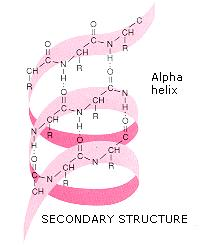 example of alpha helix and beta pleated sheet