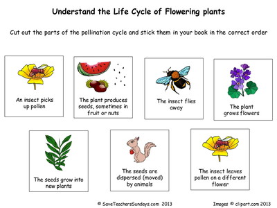 example information report year 5 plants