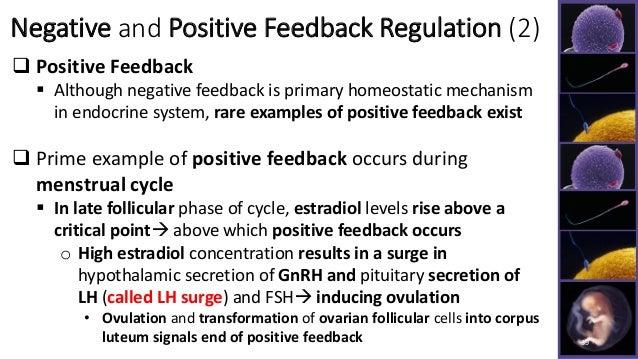 example of positive feedback and negative feedback