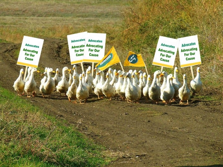 get ducks in a row idiom example