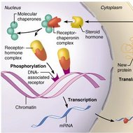 thyroid hormone receptor is an example of
